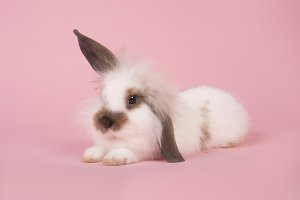 Cute bunny lying down on a pink back