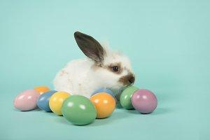 Young rabbit between Easter eggs