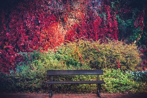 A bench and colorful autumn foliage