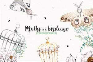 MOTHS and BIRDCAGE watercolor set