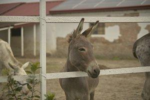 donkey in the pen