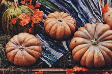 Colorful pumpkins by  in Holidays