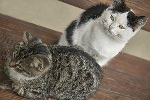 Kittens resumed from above