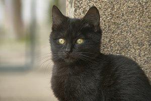 Closeup of a black kitten