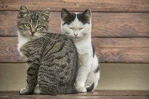 Two sweet kittens sitting