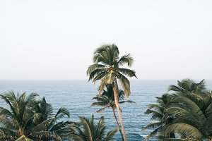 Palm trees tropical.