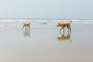 Dogs stand in the water against the