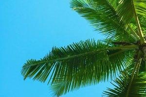 Palm tree leaves.
