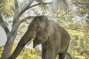 Thai elephants stand under the trees