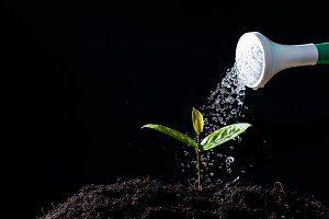 Farmers are watering seedlings.
