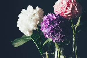 pink, white and purple hortensia blo