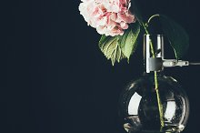 pink hortensia flower in glass vase, by  in Beauty & Fashion