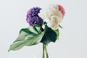 bouquet of blooming hortensia flower