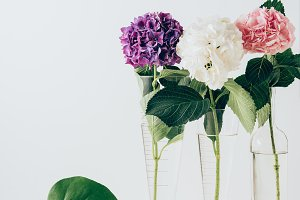 pink, purple and white hydrangea flo