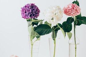 pink, purple and white hydrangea blo