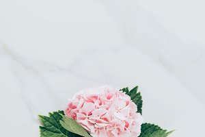 top view of pink hydrangea flower wi