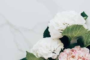 top view of white and pink hortensia
