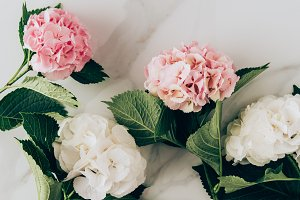 top view of pink and white hydrangea