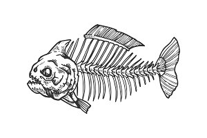 Piranha fish skeleton engraving