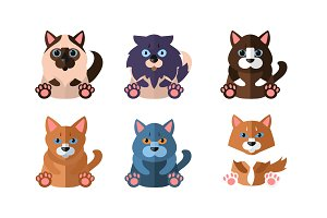 Cats of different breeds set, cute