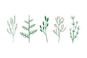 Culinary herbs set, botanical