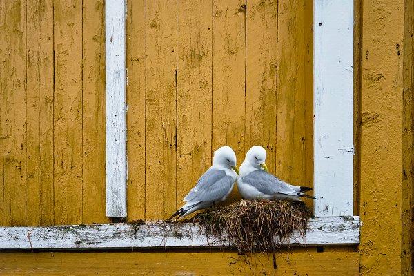 Architecture Stock Photos: f9photos - Seagull bird close up