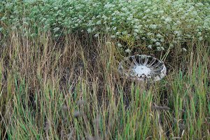 Abandoned Car wheel cap in the grass