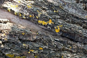 Bark of the old wood