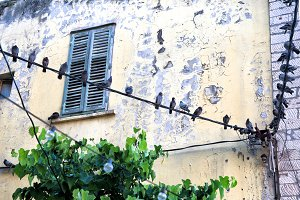 Pigeons sit on the wire