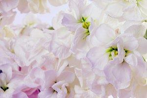 Flower white bouquet background.