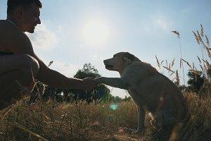 Labrador or golden retriever sits on