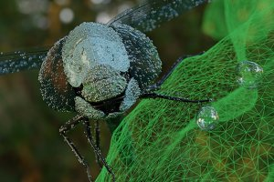 Surreal macro dragonfly with water