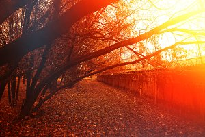 Curved autumn trees in sunset park l