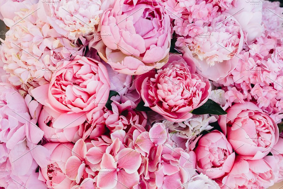 Pink Peonies Background Nature