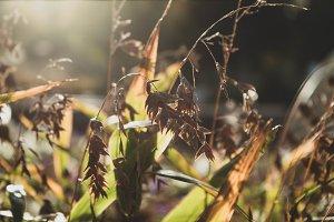 Grasses in the Morning Light