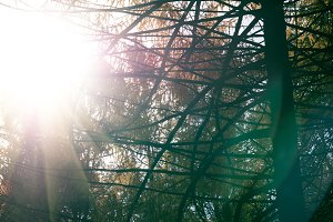 Sun flares during branches of trees