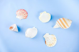 Summer seashells background