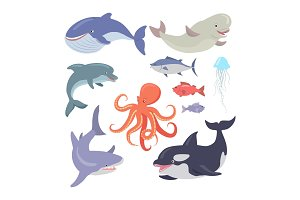 Whale, Shark, Octopus, Seals