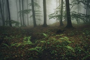 Mysterious green foggy forest