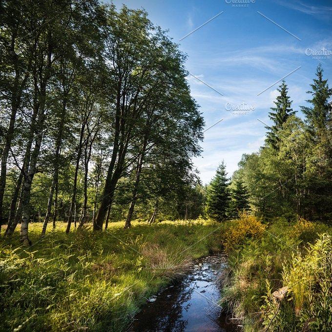 At the creek... - Nature