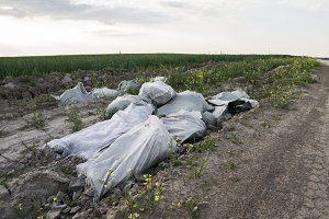 Illegal waste disposal. Pollution of