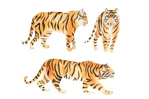 Watercolor Tiger Set
