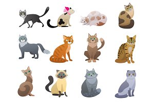Funny and cute cartoon Cats set