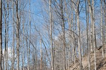 Spring forest. Thicket