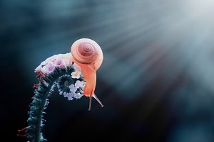 snail, macro, insect, nature,