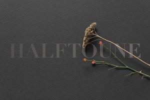 Stock Photo Plants, Black Background