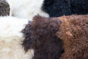 Sheepskin on the counter. Sale of