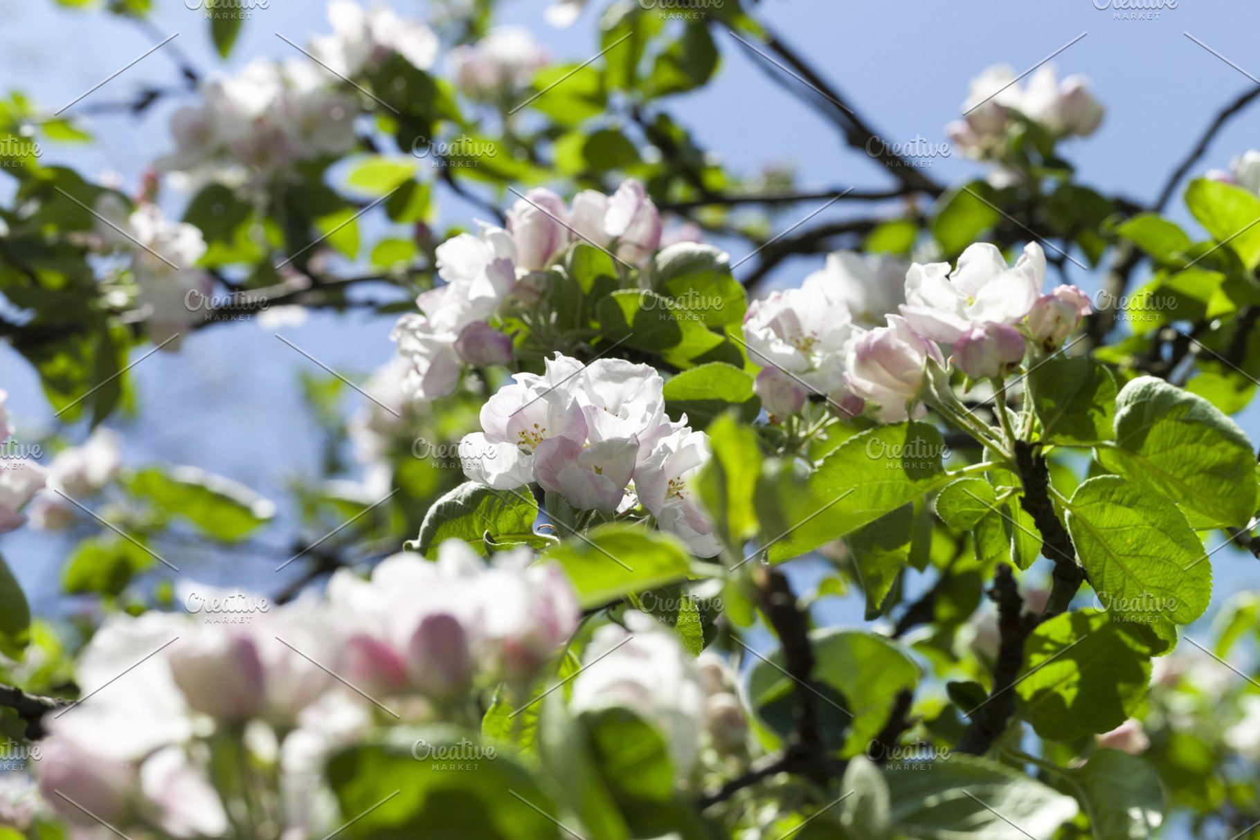 White Flowers Of Trees High Quality Nature Stock Photos