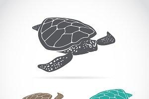 Vector of turtle design. Reptile.