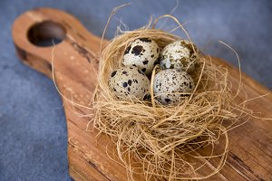 Quail eggs on nest